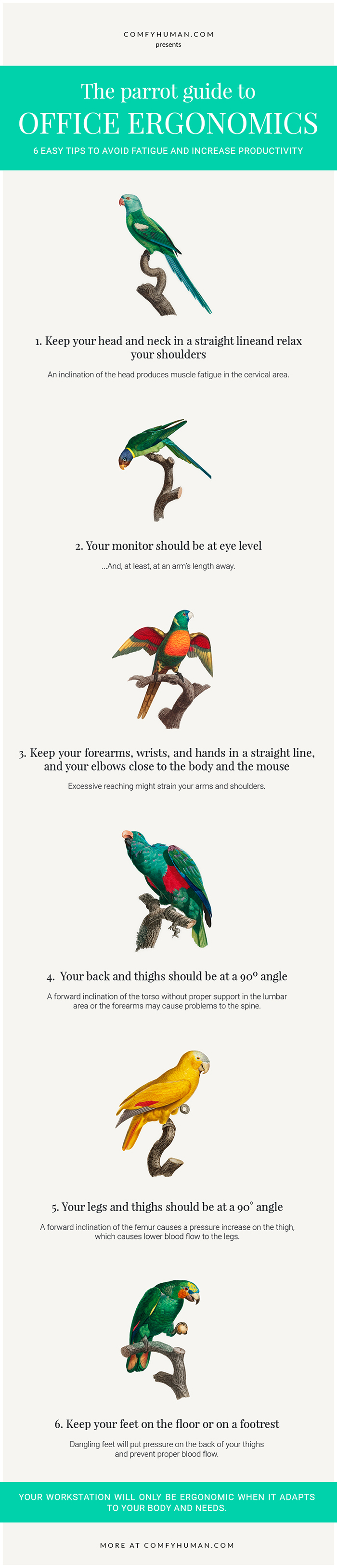 """""""The Parrot Guide to Office Ergonomics"""" Infographic"""