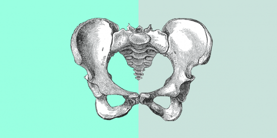 Illustration of the coccyx aka the tailbone